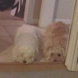 saddogs